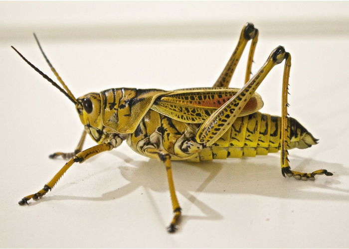 Bugs, the Cross-Cultural Superfood You've Gotta Get